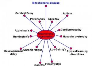 mitospider